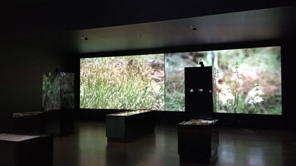 Katoomba Experience Centre